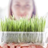 Brotes y germinados: añádelos a tu dieta