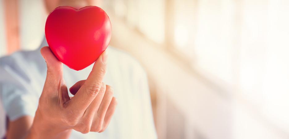 El los ejercitar sanguíneos y corazón vasos